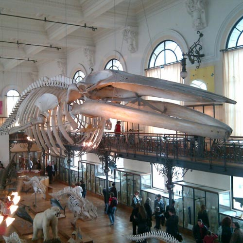 Musée Océanographique de Monac-ville