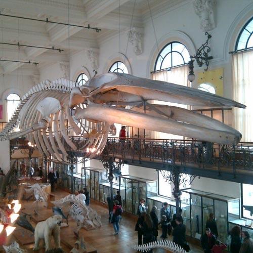 Oceanographic Museum of Monaco-ville